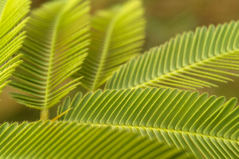 Leaf Green Color Nature Frond Close-up Freshness Growth Plant Lush Foliage Fern Beauty In Nature Tropical Climate Fragility Palm Tree Summer No People Backgrounds Day Outdoors Plant The Week On EyeEm Freshness EyeEmNewHere