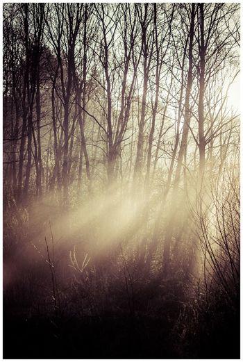 sun beams from