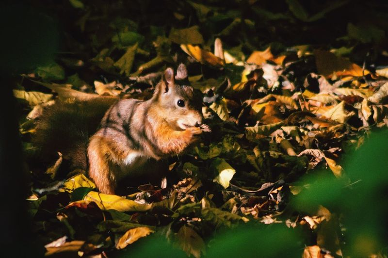 Squirrel Eichhörnchen Eichhörnli Eichhorn Wald Waldspaziergang Forest Forestwalk