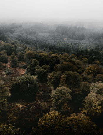 Autumn Forest drone view Tree Plant Fog Scenics - Nature Forest No People Tranquil Scene Nature Tranquility Environment Beauty In Nature Day Land Growth Non-urban Scene Lush Foliage High Angle View Foliage Landscape WoodLand Outdoors Pine Tree Rainforest Coniferous Tree
