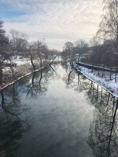 Bare trees on frozen river during winter