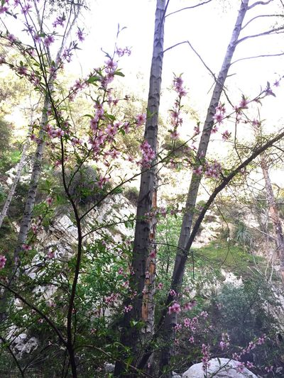 Nature Flowers Forest Hiking Pink Bloom Spring EyeEmNewHere