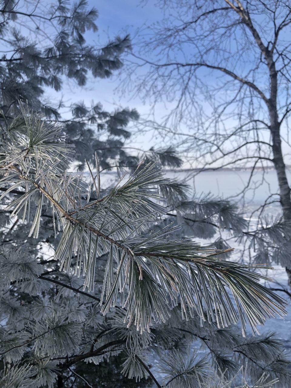 CLOSE-UP OF FROZEN PLANTS AGAINST SKY