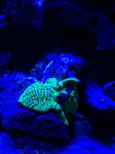Blue Underwater Water Sea Life Sea UnderSea Animal Themes Aquarium Animal Wildlife Nature Beauty In Nature Close-up Indoors  No People Day No Filter, No Edit, Just Photography GreenBlue Light Coral Reefs Eye Spy A Fish Fish Photobomb Hairy Mushroom Flourecent Amazing Tank Life