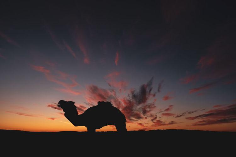 Sunset over desert