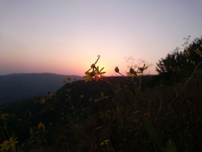 Sunset Nature Dusk Plant Sky Landscape Field Tranquility Adult Outdoors Tree Agriculture Scenics Beauty In Nature Rural Scene Day People Beauty Flower Clear Sky Nofilternoedit Zoomandsee