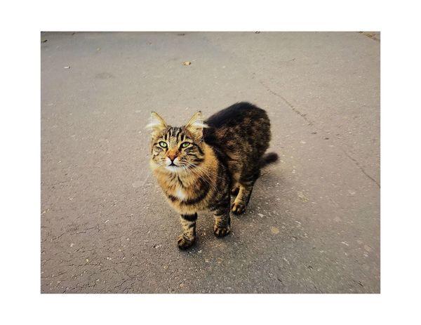 Domestic Cat Cat Cat♡ Cat Lovers Animals Animal Head  Street Nature Odessa,Ukraine Odessa No People