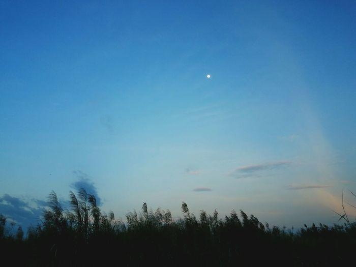 #dreamfield #alone #snapseed #dreamfield #alone #snapseed