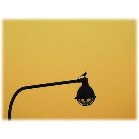 🌇🐦 静かな夕暮れ🎶☺ A quiet evening🎶☺ ※ 名古屋港 Port_of_Nagoya 日本 Japan Aichi Nagoya 夕焼け Sunset 夕暮れ Dusk 自然 Nature 安らぎ Peace 夕空 Evningsky 綺麗 Beatiful 風景 Landscape Orange Vista 😚 Mysunset_japan_nagoya_I 'mmitu ※ Stock Photo