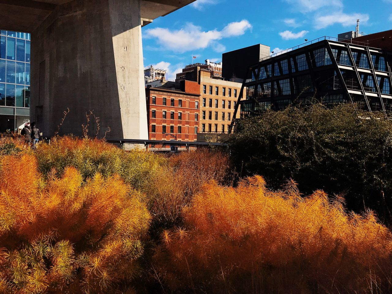 architecture, built structure, building exterior, autumn, tree, change, sky, outdoors, no people, nature, leaf, day, residential, plant, growth, beauty in nature, city