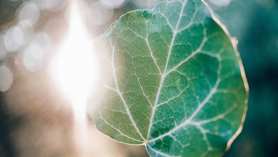 2 hearts leaf Background 2 Hearts Forest Love Leaf Sunlight Lens Flare Close-up Green Color Plant