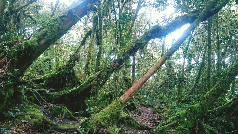 Mossy Forest in