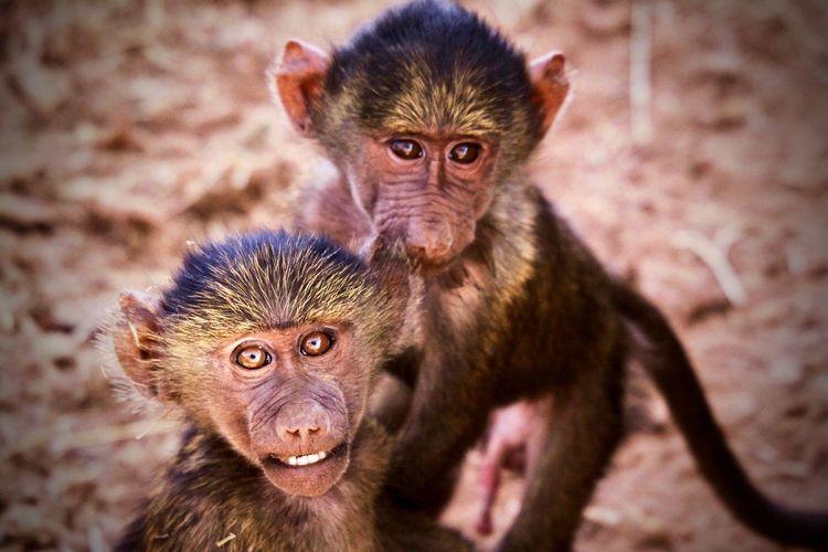 Portrait of two monkeys outdoors