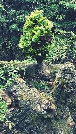 节外生枝 Leaf High Angle View Close-up Plant Green Color