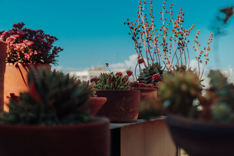 Valparaiso, Chile. March 2017 Beauty In Nature Blue Sky Chile Clear Sky Close-up Day Flower Flowers Fragility Freshness Growth Light And Shadow Nature No People Outdoors Plant Potted Plant Selective Focus Sky Succulent Plant Succulents Summer Tree Valparaiso, Chile