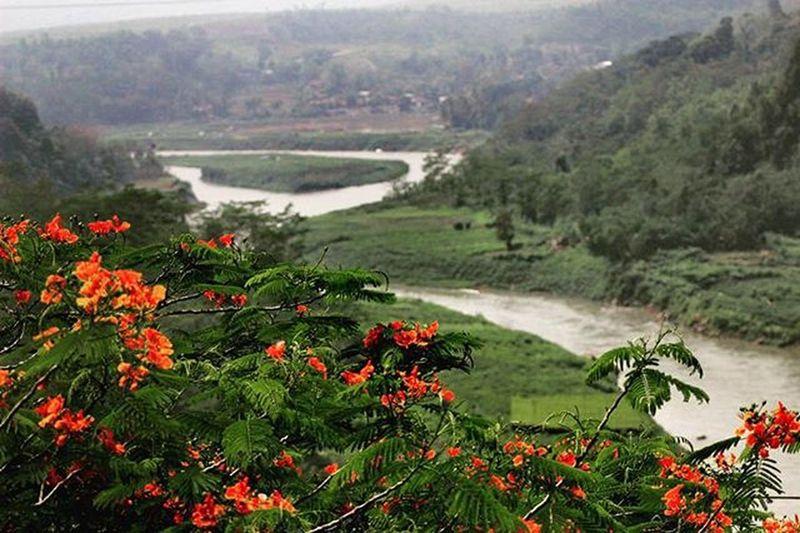 Great scene. Landscape Landscape_lovers Scene Beautifulflowers River Nature Beautiful Green Cianjur Citarum Sungaicitarum