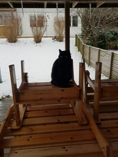 Black cat want to come to our Home 😎 Wood - Material No People Chair Water Day Architecture Outdoors