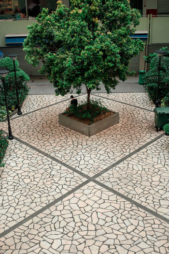 singapore Singapore Architecture Architecture_collection Architectural Column Lines Perspective Tree Plant Ornamental Garden Paving Stone Garden Path Plant Life Formal Garden Paved Landscaped