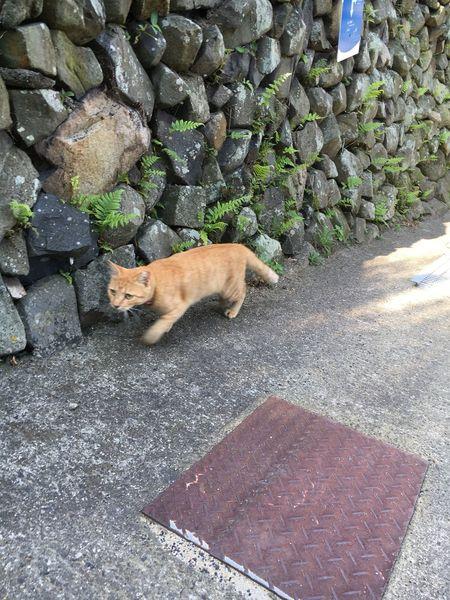Cat Takeawalk  Relaxing Tadaa Community 🐈