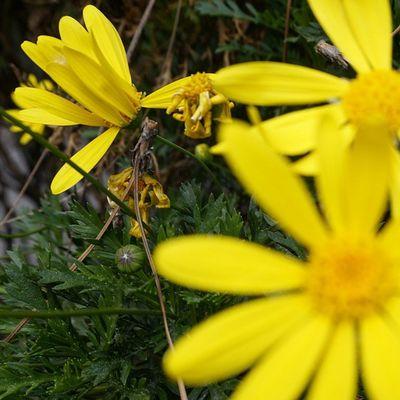 Helloworld Flower Yellow Plants Sunny