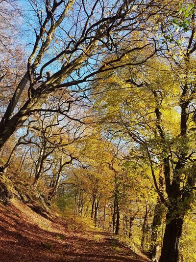 Low Angle View Full Frame Backgrounds Nature Tree No People Beauty In Nature Day Outdoors Sky Sunlight Growth Branch Close-up Autumn Eaves Wood Mytholm Calderdale WoodLand Forest Beauty In Nature Tree Nature