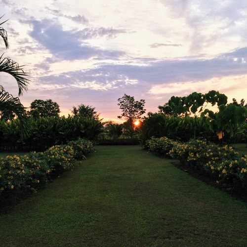 Eyeem Philippines Goldenhour Sunset Garden Garden Photography Negros Bacolod Travel The Great Outdoors - 2016 EyeEm Awards The Photojournalist - 2016 EyeEm Awards The Following The Ruins Green The Essence Of Summer