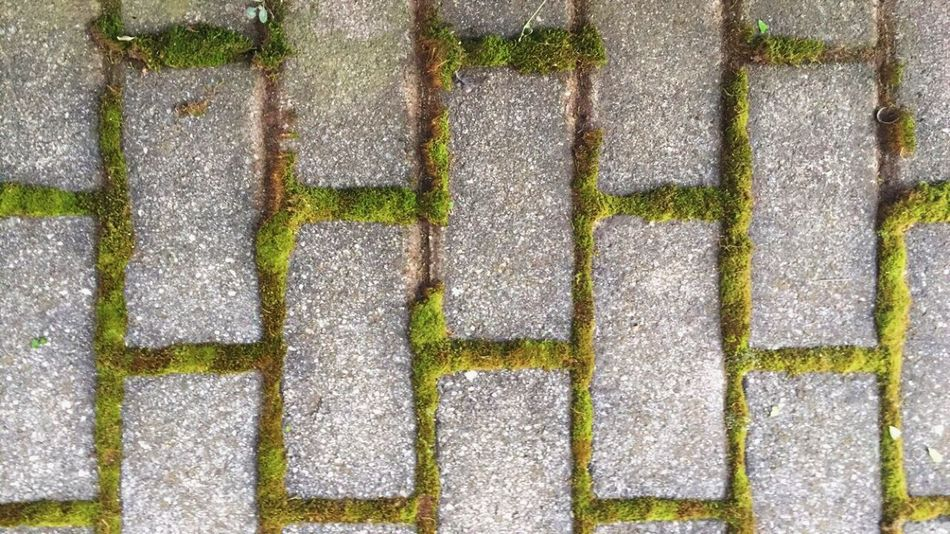 Full Frame Backgrounds Pattern Day No People High Angle View Outdoors Textured  Moss Stone Tile Close-up Ground Green Jard Garden Nature