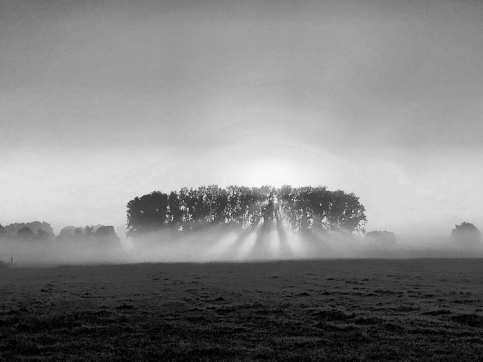 Black and white landscape photo of the rising sun shining through the trees and the mist over a farmfield Plant Sky Land Landscape Tree Nature Field Environment Scenics - Nature Agriculture Tranquility Growth Day Beauty In Nature No People Rural Scene Copy Space Outdoors Tranquil Scene