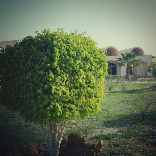 Siwa Oasis Tree Landscape :D First Eyeem Photo