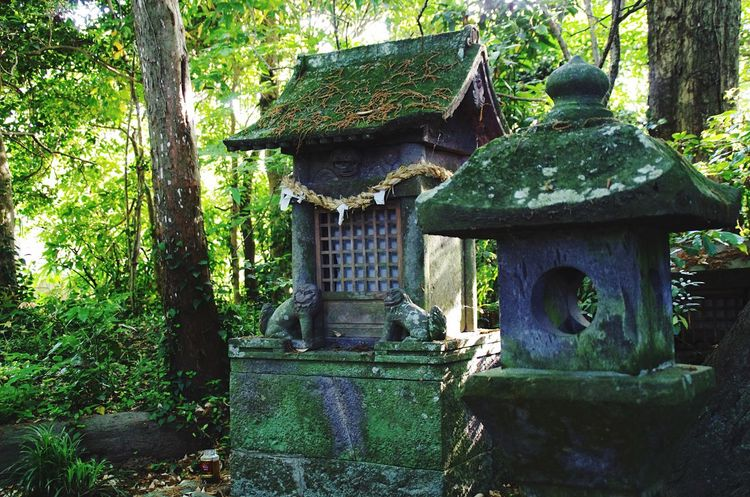 Shrine Forest Green Statue Moss Oita,japan Oita Japan Traveling Hanging Out Light And Shadow Sacred Ultimate Japan Hidden Gems