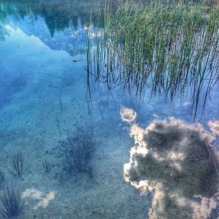 Upside down Reflections EyeEm Nature Lover Water Nature No People Day Plant Outdoors Tree Blue Reflection Waterfront
