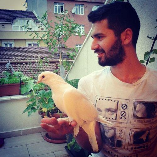 Evimizin Yeni üyesi Kus güvercinşugüzelliğebakçoktatlıseviyorumbunlarıistanbultürkiye....