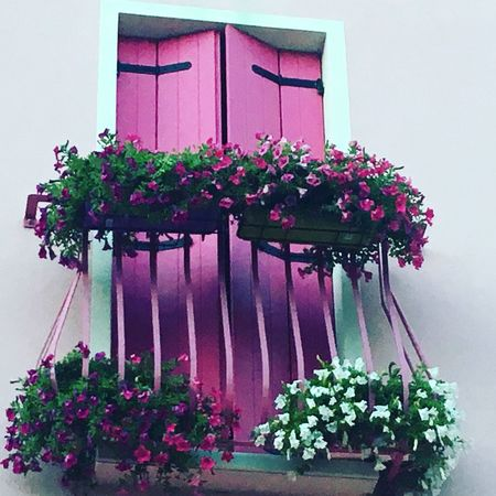 Flower Plant Architecture Built Structure Beauty In Nature Exeptional Photographs EyeEm Best Shots Tadaa Community House From My Point Of View The Week Of Eyeem EyeEm Gallery Germany Photos Official EyeEm © Perfect Moment Perfect Match Multi Colored Pink Color Flowerbed
