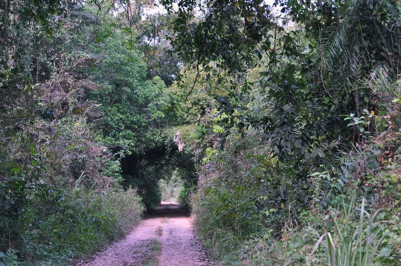 natural gate