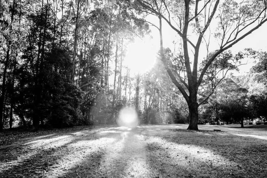 Meet the challenge of 2018 Black And White Light And Shadow Monochrome Tree The Way Forward Nature Road Tranquility Day Outdoors No People Sunlight Beauty In Nature Branch Sky