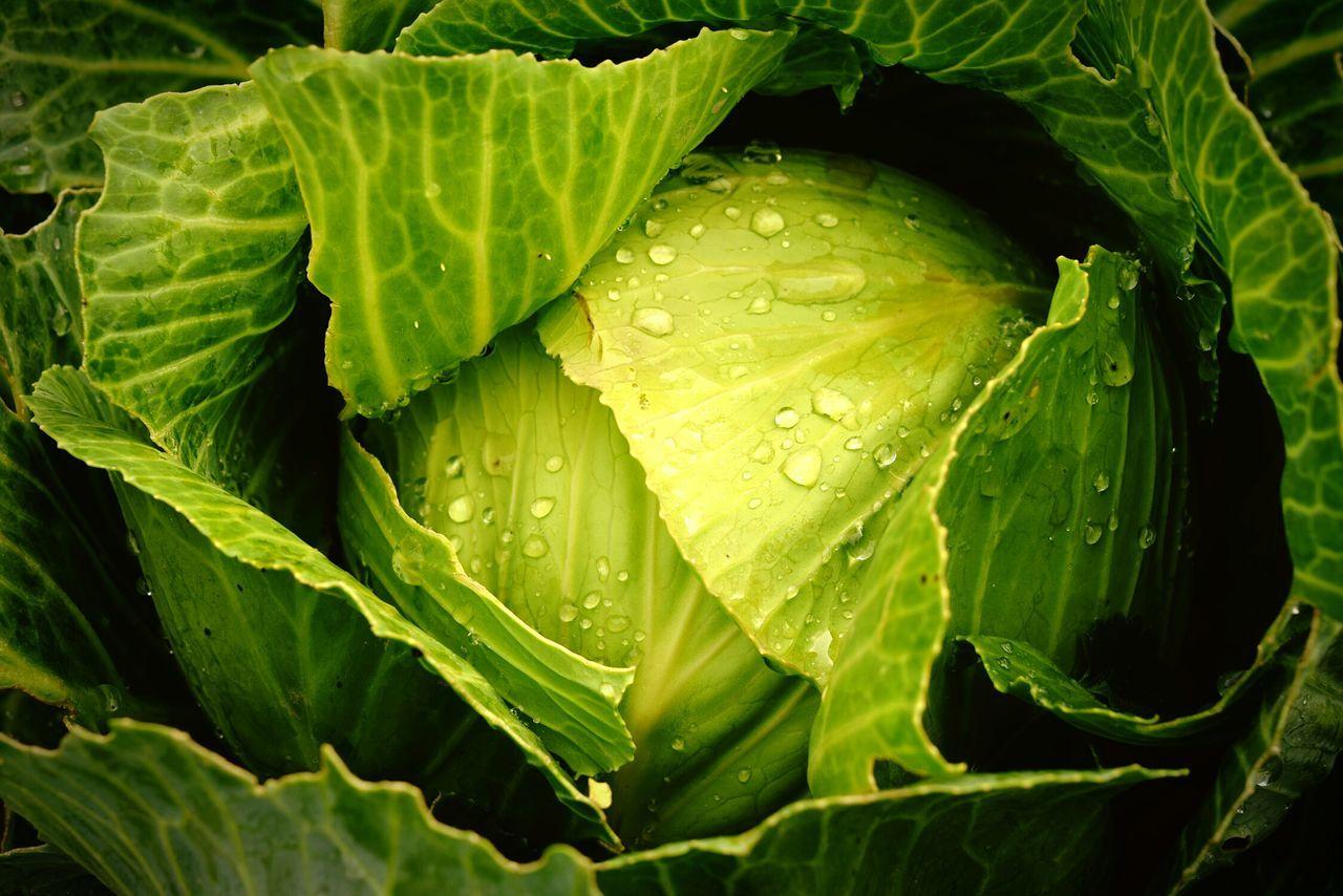 Full frame shot of fresh cabbage
