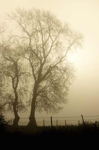 The mist and the trees with no leaves give this shot a tranquil and ethereal feel Barbed-wire Fence Countryside Uk Denmead, Hampshire Ethereal Feel Monochrome Mist Sepia Tint Sun Behind The Mist Trees In The Mist