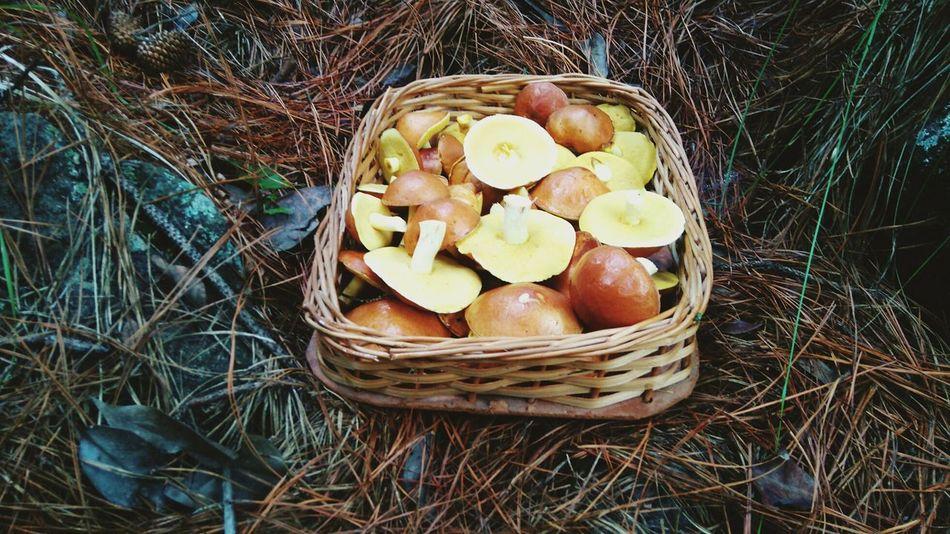 Hongos Hongos  Basket Outdoors Otoño 🍁 Nature Atos Pampa