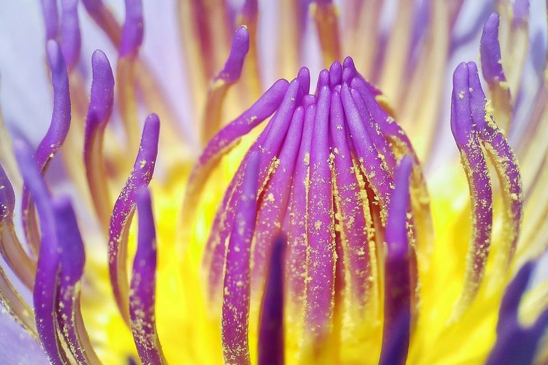 Flower Nature Beauty In Nature Petal Drop Flower Head Water Wet Plant Fragility Close-up Yellow No People Living Organism Freshness Growth UnderSea Outdoors Day