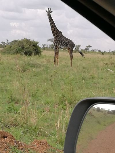 Today when i was passing at serengeti national park