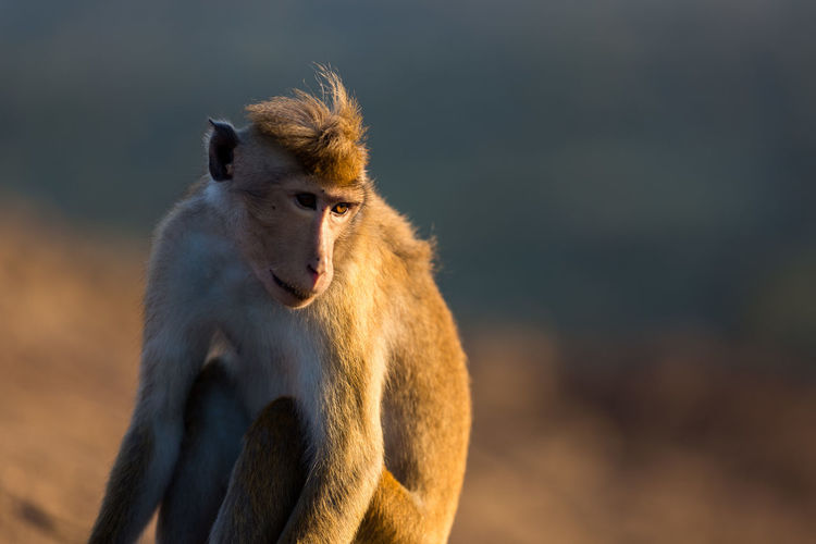 Close-up of monkey against sky