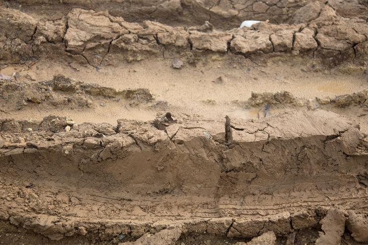 brawn soil