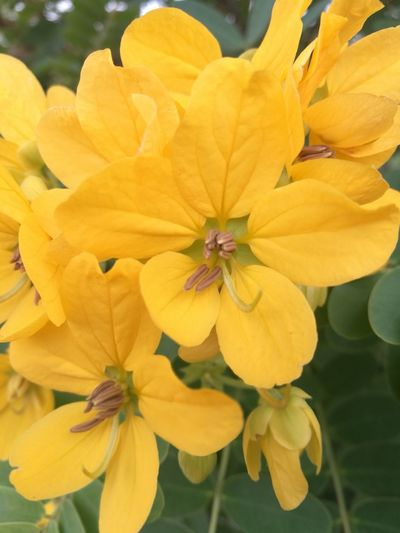 Yellow & green Flower Yellow Plant Beauty In Nature Nature Blossom Outdoors No People Day Close-up