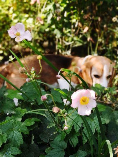 Flower Head Flower Pets Petal Leaf Dog Close-up Plant