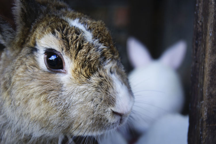 Alertness Animal Body Part Animal Head  Animal Nose Animal Themes Animals Close-up Cute Day Focus On Foreground Hare Looking Mammals Nature Omnivore Pets Rabbits Snout