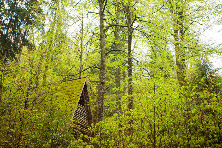Beautiful summer view of green dense forest and roof of wooden house Beauty In Nature Day Forest Green Color Growth House Low Angle View Nature No People Outdoors Roof Scenics Tranquility Tree Wood - Material Yellow
