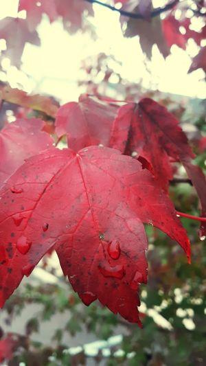 Fall has