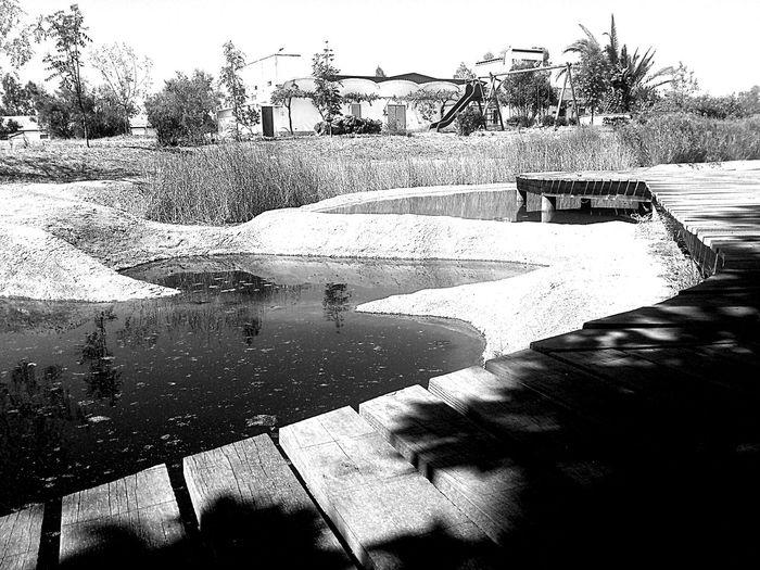 Frog lake. Bw_collection Blackandwhite EyeEm Best Shots EyeEm Best Edits