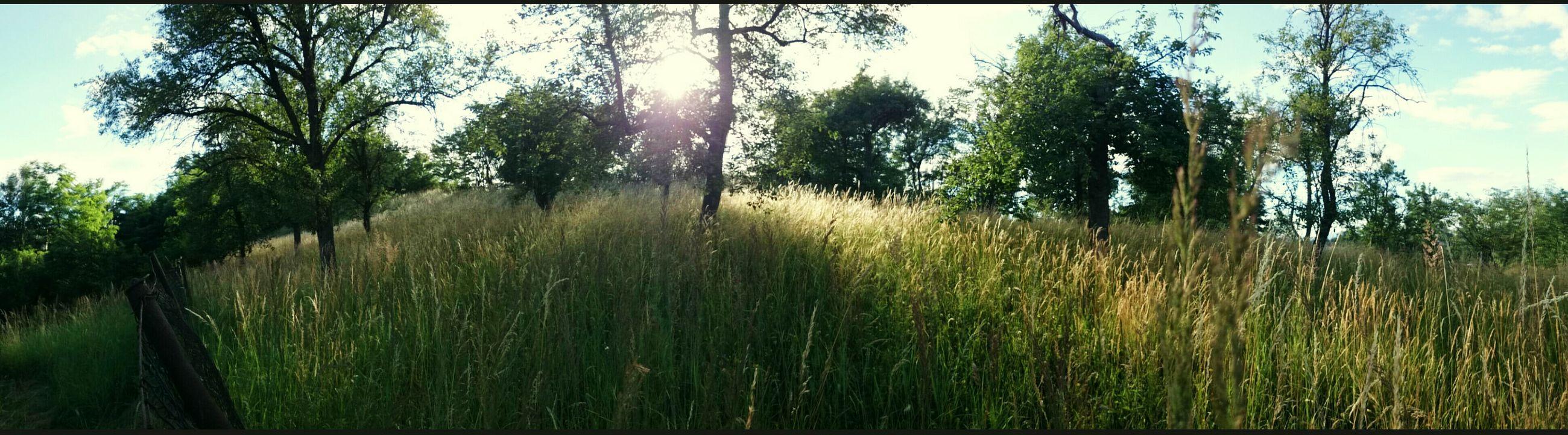 Panoramic Photography Taking Photos Relaxing Nature Grass Sunset Beautiful Nature