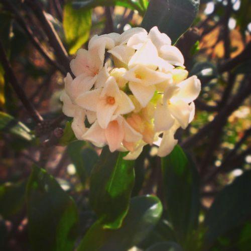 Spring blooms!! 3